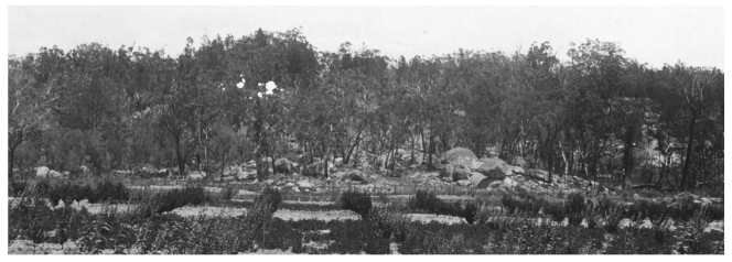 QSA Item 435647 Pikedale General View of Training Farm Jan 1920